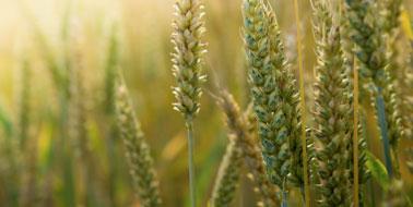Agribusiness Market Intelligence | Mercantile Consulting Venture Inc.