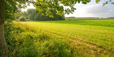 Agriculture Market Intelligence Products | Mercantile Consulting Venture Inc.